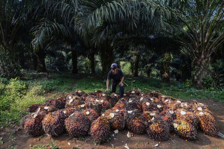 Walhi Desak Pemerintah Buat Road Map Kelapa Sawit untuk Biodiesel