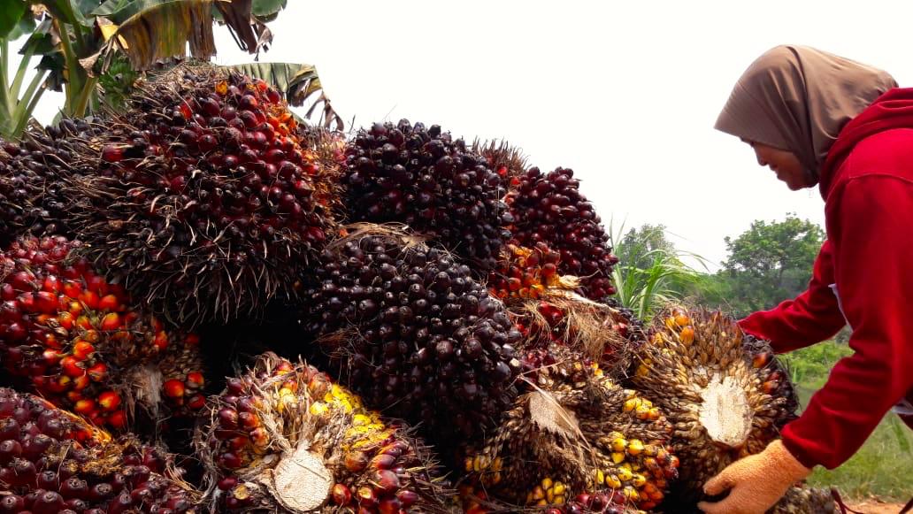 Menilik Hulu Hilir Kebijakan Biodiesel Indonesia